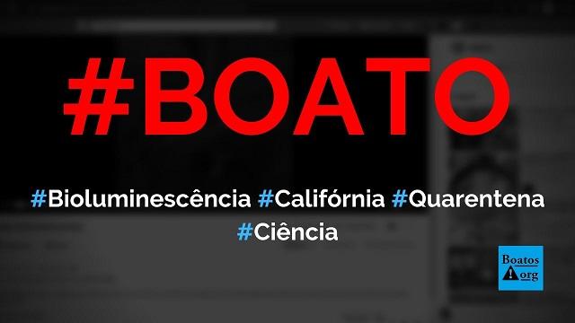 Bioluminescência em ondas do mar da Califórnia (EUA) ocorreram por causa de quarentena, diz boato (Foto: Reprodução/Facebook)