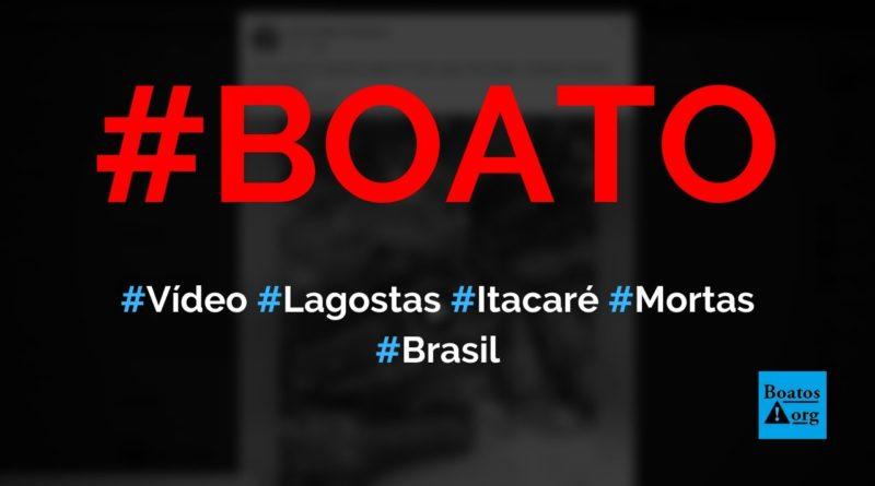 Vídeo mostra lagostas mortas na beira da praia de Itacaré (Bahia), diz boato