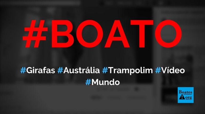 Girafas da Austrália saltaram de trampolim, fizeram acrobacias e mergulharam na água, diz boato (Foto: Reprodução/Facebook)