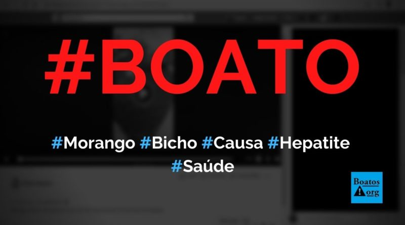 Bicho do morango (broca) causa doenças como a hepatite, diz boato (Foto: Reprodução/Facebook)